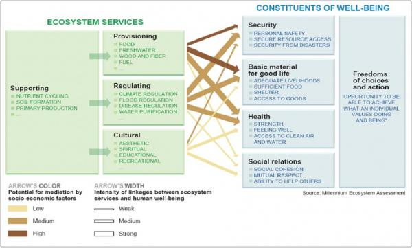 relationship between biodiversity and ecosystem services forests